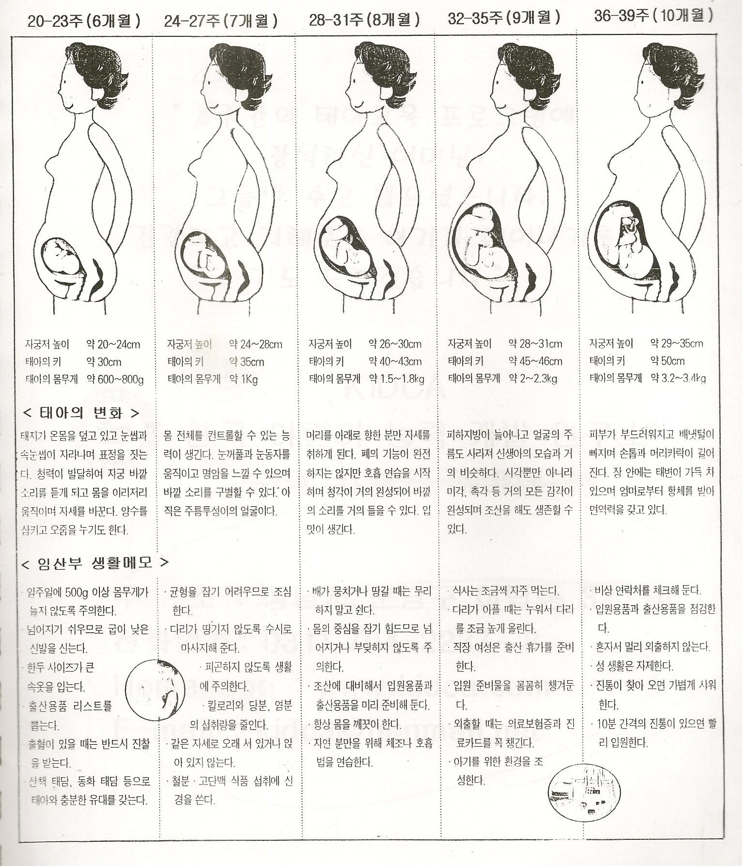 임신 40주 생활 스케줄표